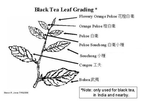 Black Tea Leaf Grading