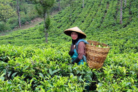 The tea gardens in Indonesia