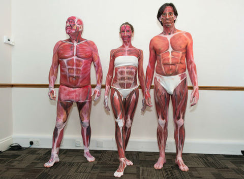 body painting anatomy models