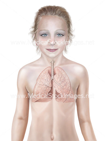 Child Aged Nine with Healthy Lung Anatomy
