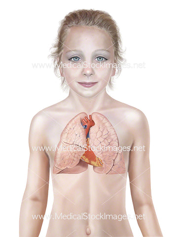 Child with Heart and Lungs