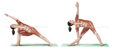 Yoga Poses Extended Side Angle and Triangle