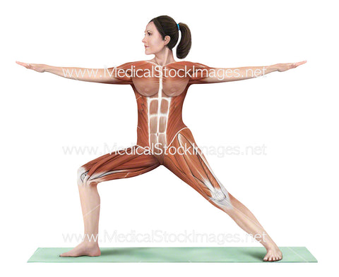 Yoga Pose Warrior 2 Virabhadrasana II