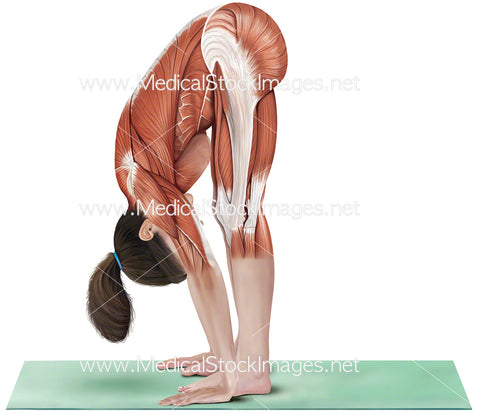 Yoga Standing Forward Bend Uttanasana
