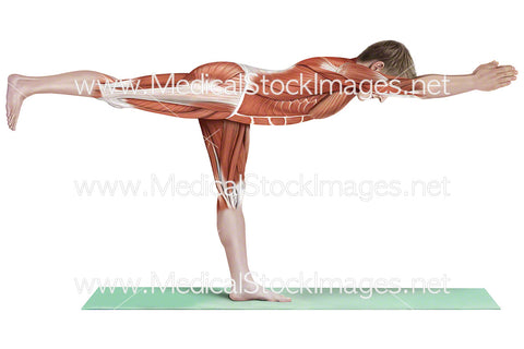 Yoga Warrior 3 Virabhadrasana III