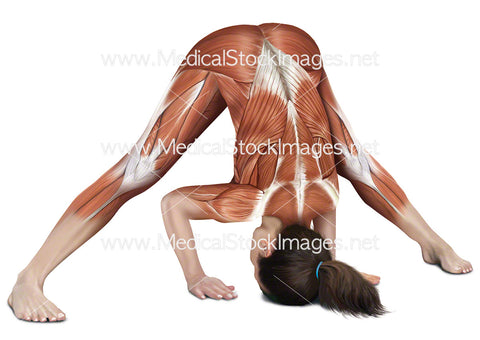 Yoga Wide Leg Forward Bend Prasarita Padottanasana