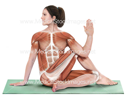 Yoga Half Lord of the Fishes Ardha Matsyendrasana