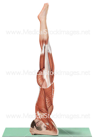 Yoga Head Stand Sirsasana