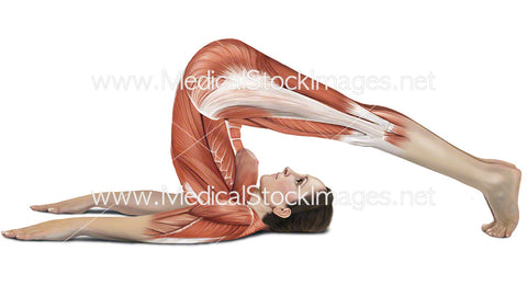 Plough Pose Halasana