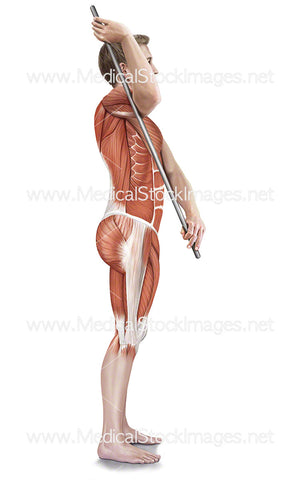 Assisted Subscapularis Stretch