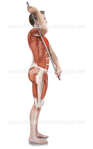Assisted Subscapularis Stretch with Muscle Highlights