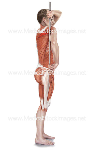 Assisted Infraspinatus Stretch with Muscle Highlights