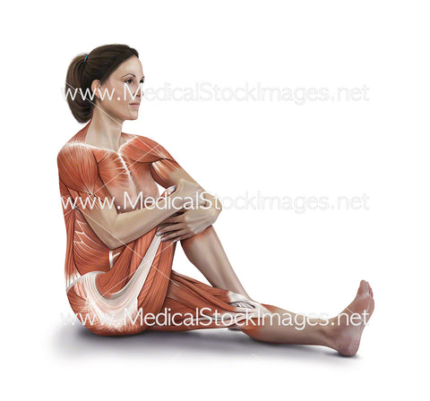 Sitting Buttock Stretch