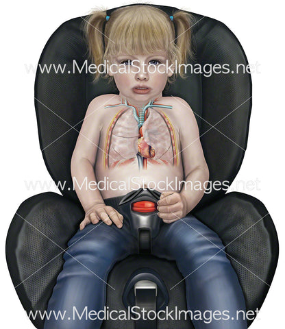 Child in Car Seat Lungs and Heart Anatomy