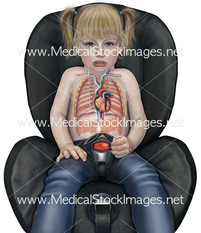 Child in Car Seat with Heart Anatomy