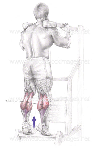 Standing Calf Raise – Labelled