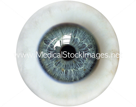 Eyeball with Medium Sized Pupil