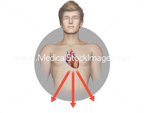 Heart ECG - Peripheral Leads – Pack of 4 Images in the Sequence