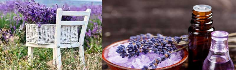rosevalley.land, How to use lavender oil, Lavender oil for hair, Lavender oil benefits, Where to buy lavender oil, Lavender oil for sleep, Lavender oil for acne, Lavender oil amazon, Lavender oil for acne, Lavender oil for burns, Lavender oil for dogs, Lavender oil for cats
