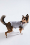 Striped Ruffle Dog Dress