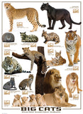 Big Cats - 1000 Piece Jigsaw Puzzle - Games2Puzzles