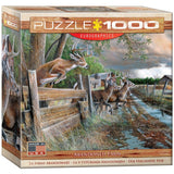Abandoned Farm - 1000 Piece Jigsaw Puzzle - Games2Puzzles