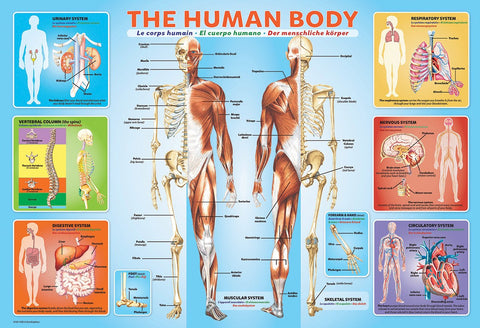 The Human Body - 200 Piece Jigsaw Puzzle – Games2Puzzles