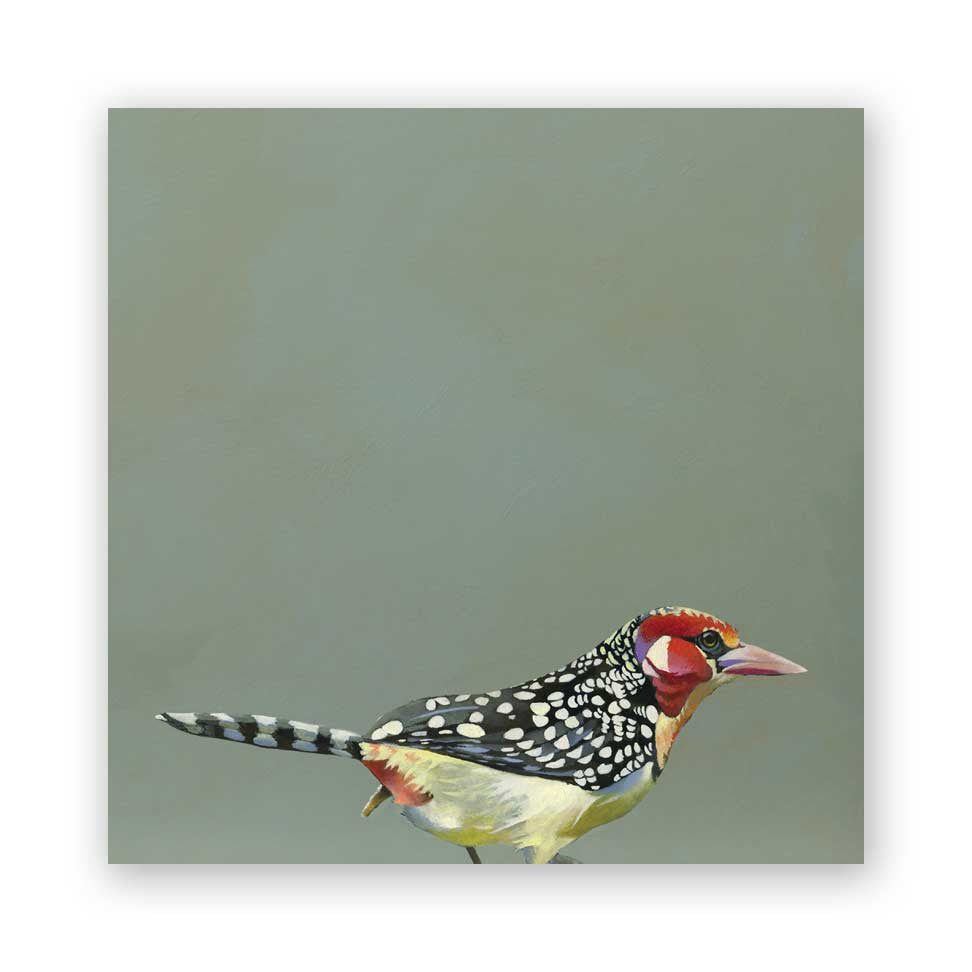 Red & Yellow Barbet - Wings on Wood®