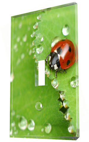 Red lady bug on leaf with morning dew
