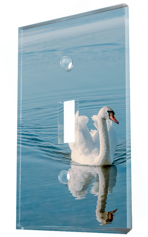 A Graceful White Swan Wading Across A Calm Lake