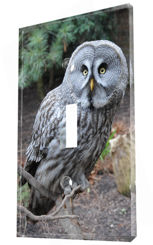 A Great Gray Night Owl