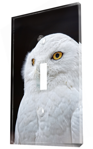 A Majestic White Owl With A Pair Of Intense Yellow Eyes