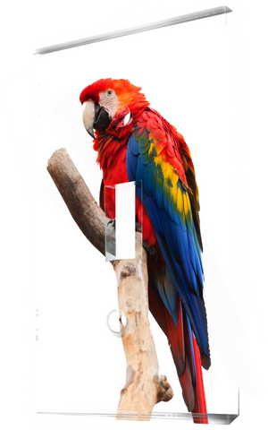 A Beautiful Scarlet Macaw Parrot