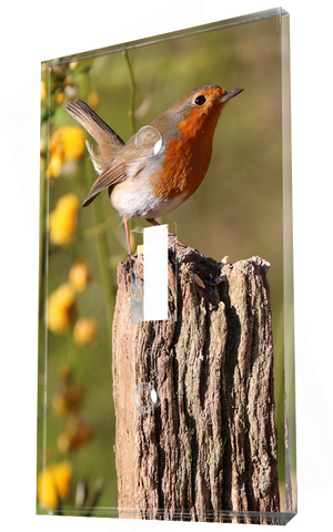 A Red Breasted Robin Sitting On A Wooden Post