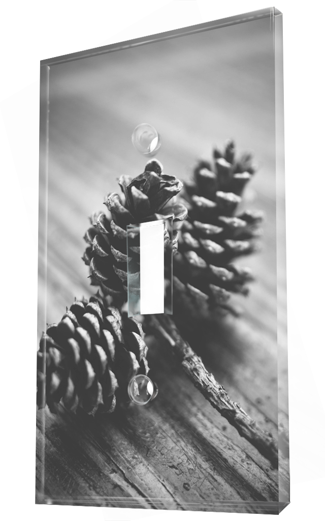 Natural Pine Cones Decoration In Black And White