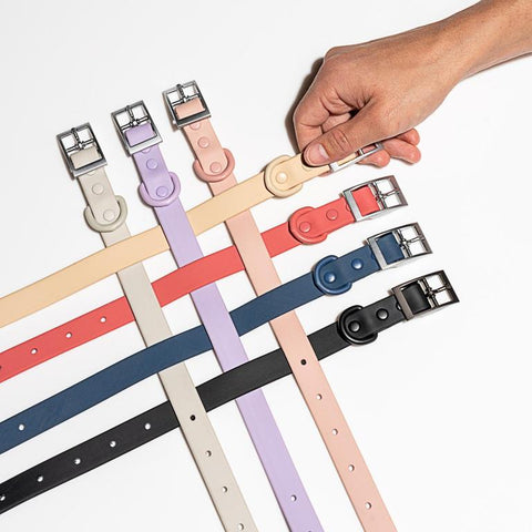 Dog Collar Colours | Wild One