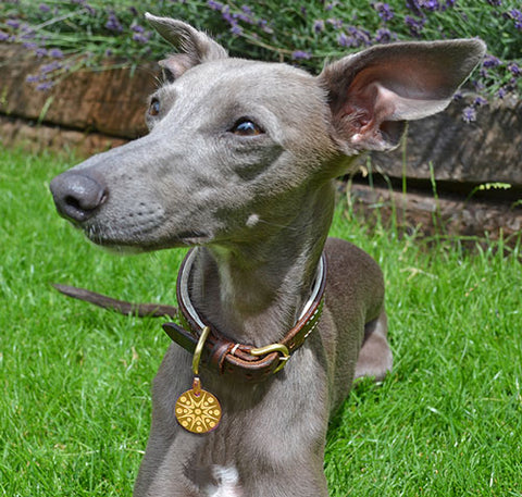 Daisy the Whippet wears a Starburst PugPendant from Canine Chic of London