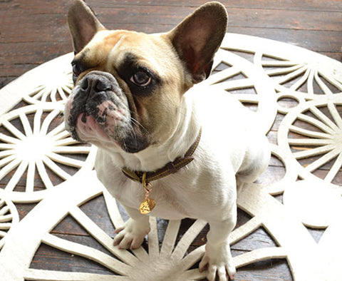 Monty the Frenchie wears a Taurus PugPendant from Canine Chic of London