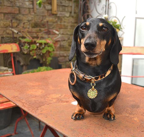 Lola the Dachund wears a PugPendant from Canine Chic of LOndon
