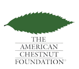The American Chestnut Foundation: Special Edition Partner