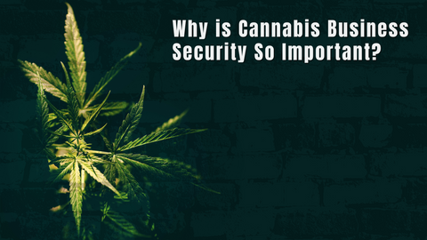 Why is Cannabis Business Security So Important?