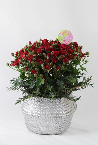 Silver Basket of Red Roses