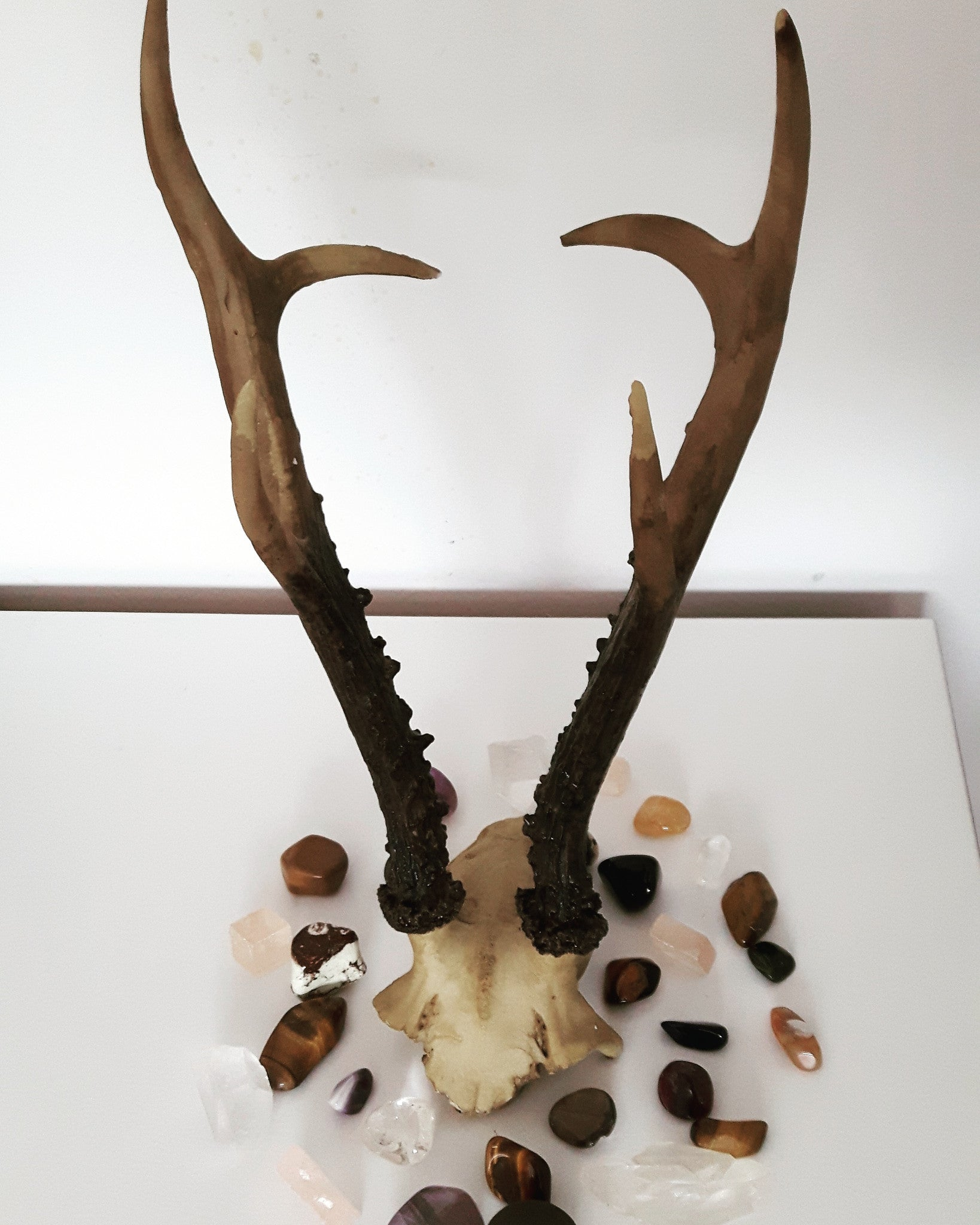 THE FIA ANTLERS