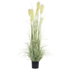 Vickerman 6' Artificial Green Reed Grass with Black Plastic Pot