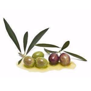 The Olive Groove:Organic Picual Extra Virgin Olive Oil (Spain) - Robust Intensity