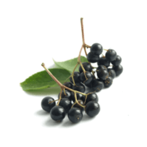 The Olive Groove:Elderberry Balsamic Vinegar