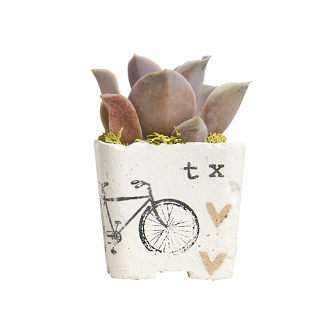 BIKE MAGNET PLANTER