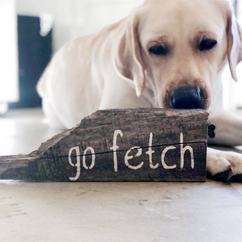 """Go Fetch"""