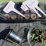 DIY Tea Herb Garden Kit