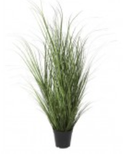 Coastal Grass In Planter